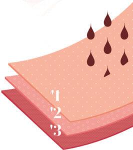 les 3 tissus de la zone d'absorption